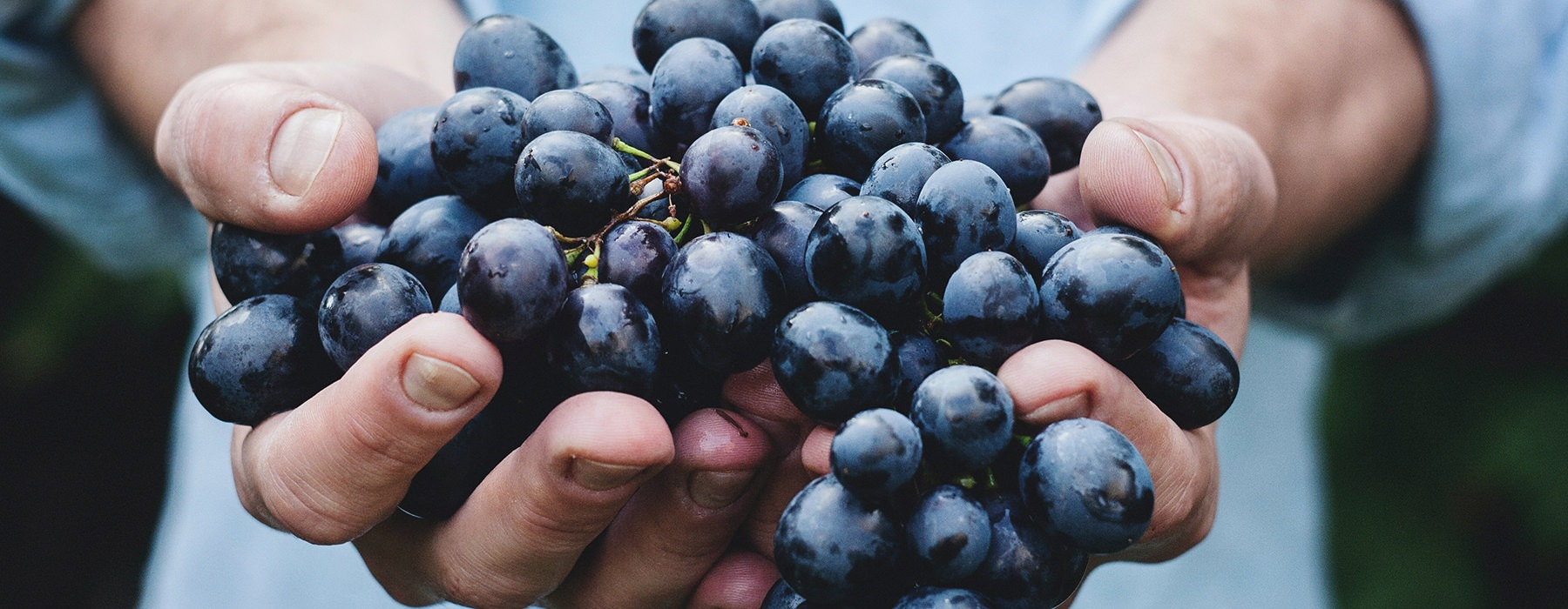 man with a handful of grapes
